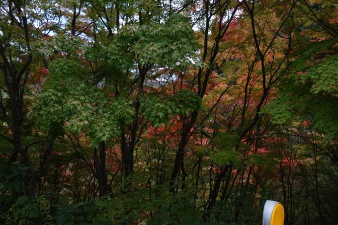 紅葉した都民の森