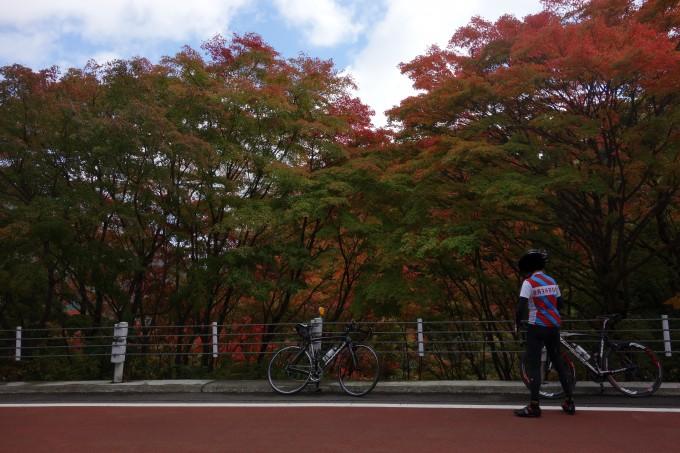都民の森と紅葉