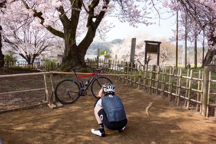 ※桜とブラックウイング